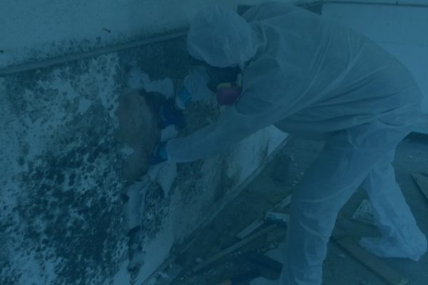 Mold-Remediation1-600x375